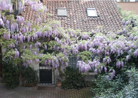 studio with wisteria