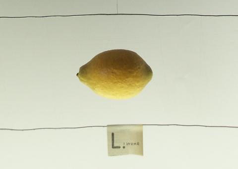 studio camilla santi-sculture volanti-limone